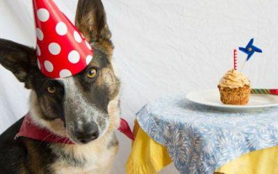 Día Mundial del Perro. 21 de julio.